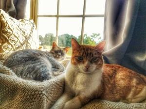 Bartlet and Ash